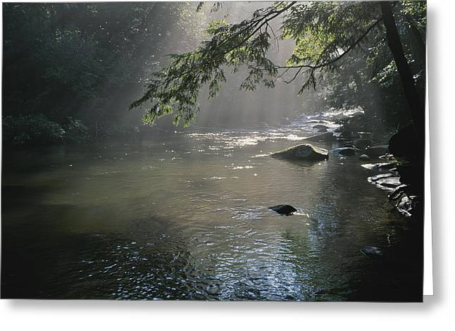 Morning Mist Lifts Off The Tellico Greeting Card by Stephen Alvarez