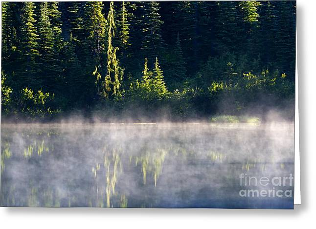 Fir Trees Greeting Cards - Morning Mist Greeting Card by Mike  Dawson