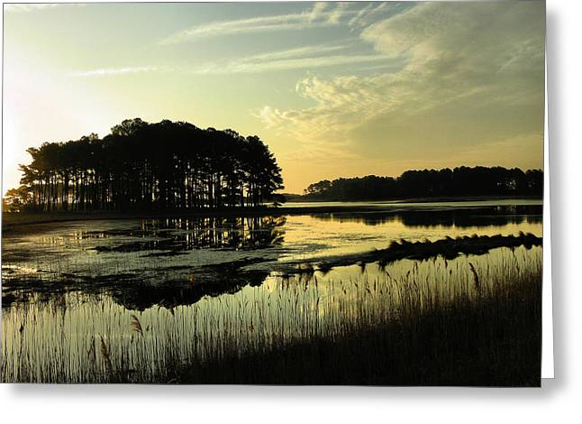 Pond Framed Prints Greeting Cards - Morning on Assateague Island Greeting Card by Steven Ainsworth