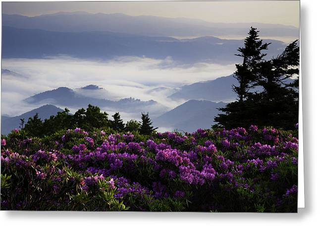 Morning on Grassy Ridge Bald Greeting Card by Rob Travis