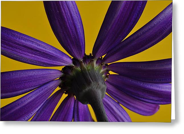 Senetti Photographs Greeting Cards - Morning Sun - First Light Greeting Card by Pepper Link
