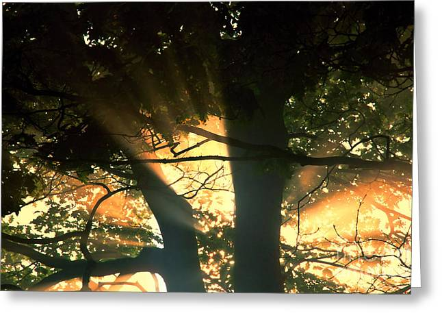 Sunrise Greeting Cards - Morning Sun Greeting Card by HD Connelly