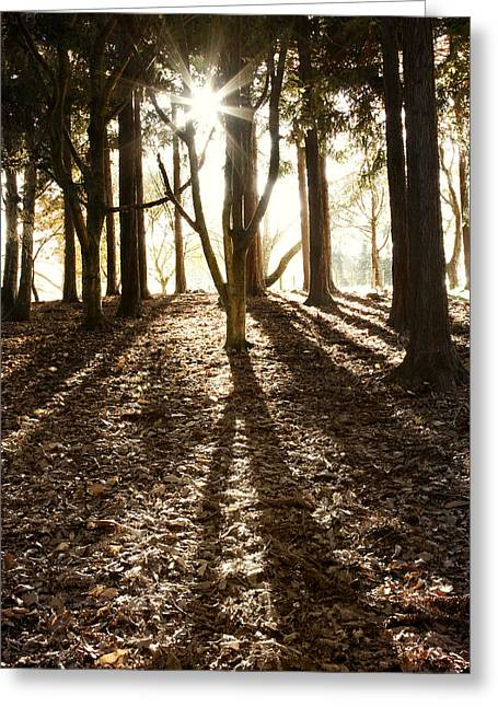 Autumn Photographs Greeting Cards - Morning sunlight Greeting Card by Les Cunliffe