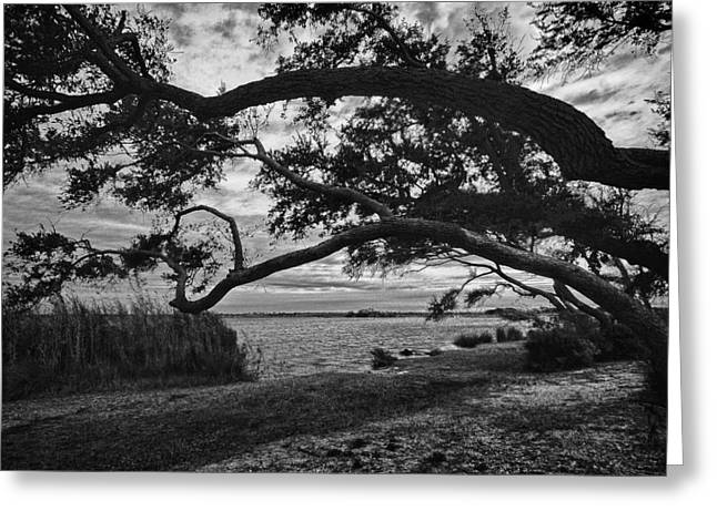 Crimson Tide Greeting Cards - Morning Sunrise in BW Greeting Card by Michael Thomas