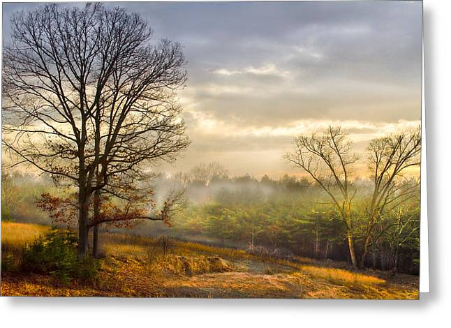 Fenceline Greeting Cards - Morning Trees Greeting Card by Debra and Dave Vanderlaan
