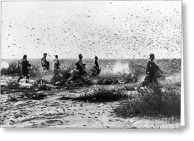 MOROCCO: LOCUSTS, 1954 Greeting Card by Granger
