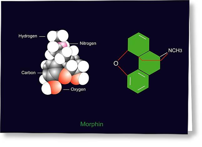Pain Control Greeting Cards - Morphine Molecule Greeting Card by Francis Leroy, Biocosmos
