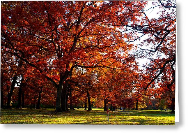 Morton Arboretum in colorful fall Greeting Card by Paul Ge