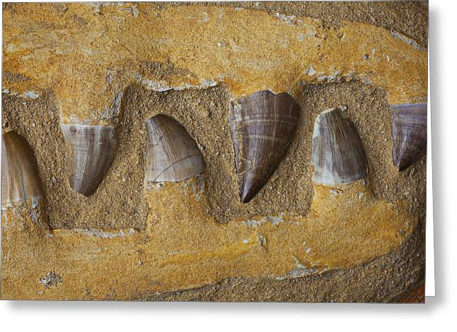 Petrified Greeting Cards - Mosasauras Teeth Greeting Card by Garry Gay