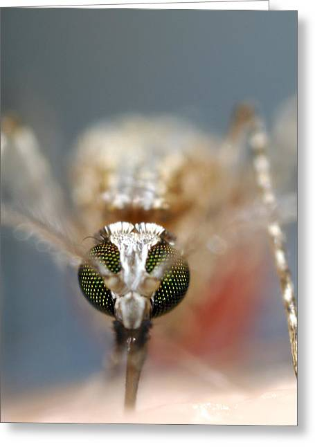 Best Sellers -  - Eating Entomology Greeting Cards - Mosquito Feeding Greeting Card by Sinclair Stammers