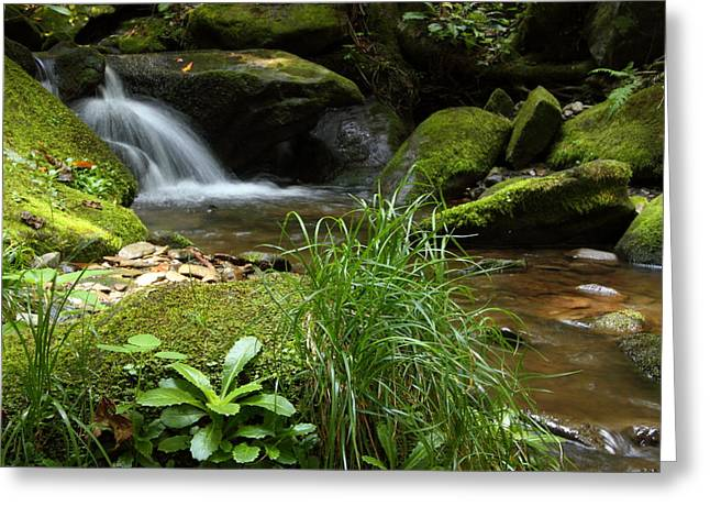 Moss And Water And Ambience Greeting Card by Andrew McInnes