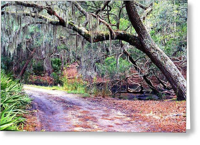 Saw Greeting Cards - Moss Covered Live Oak Greeting Card by Thomas R Fletcher