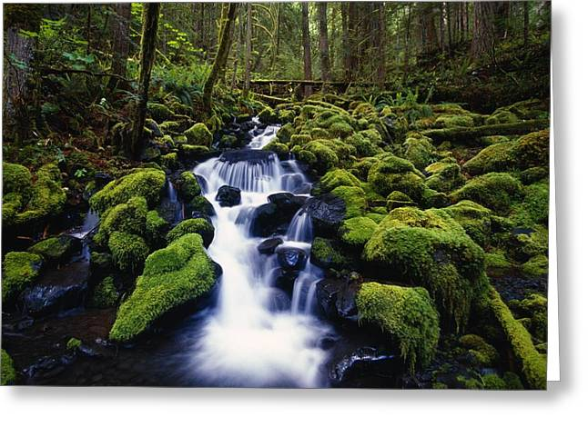 Moss-covered Rocks In Creek With Small Greeting Card by Natural Selection Craig Tuttle
