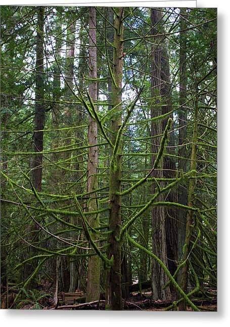 Ent Greeting Cards - Moss Covered Tree Greeting Card by Donna Munro
