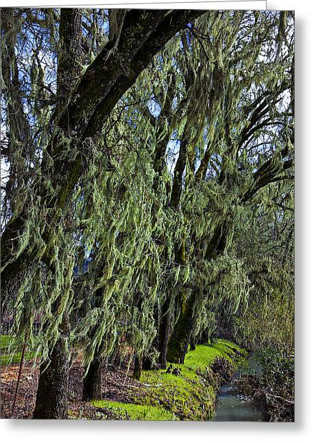 Moss Green Greeting Cards - Moss Covered Trees Greeting Card by Garry Gay