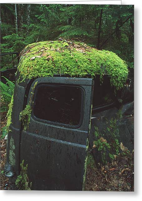 Moss-covered Greeting Cards - Moss-covered Truck Greeting Card by Alan Sirulnikoff