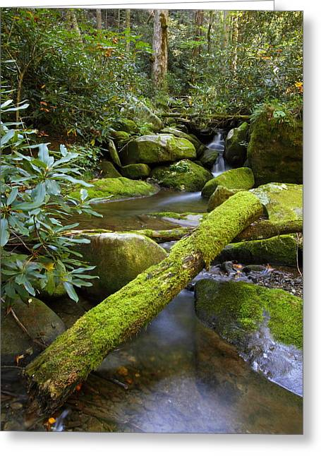 Tennessee River Greeting Cards - Moss Flourishing Greeting Card by Andrew McInnes