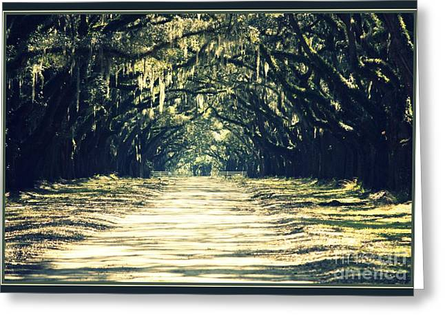 Moss Green Greeting Cards - Moss Green Road Greeting Card by Carol Groenen