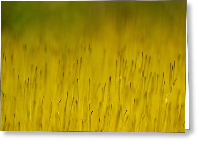 J.d. Grimes Greeting Cards - Moss in Yellow Greeting Card by JD Grimes