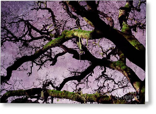 Windy Greeting Cards - Moss on an Oak Tree Branch Greeting Card by Laura Iverson
