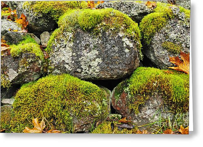 Exterior Pyrography Greeting Cards - Moss on stone Greeting Card by Conny Sjostrom