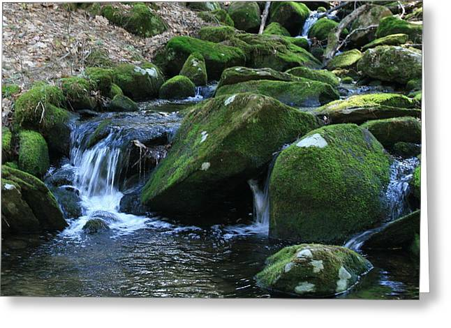 Union Connecticut Greeting Cards - Moss Overflow Greeting Card by Neal  Eslinger