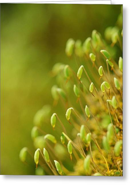 Capsule Greeting Cards - Moss With Capsules Greeting Card by Mike Grandmailson