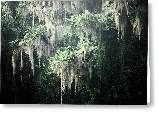 Moss Green Greeting Cards - Mossy Dream Greeting Card by Carol Groenen