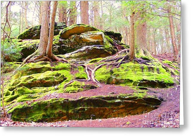 Tree Roots Greeting Cards - Mossy Dreams Greeting Card by Dora Anderson