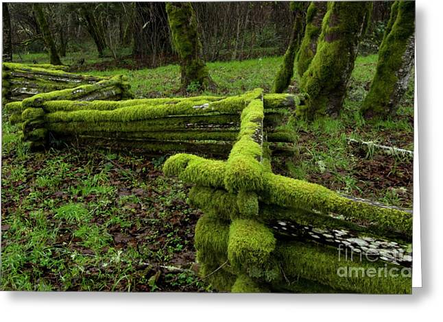 Split Rail Fence Greeting Cards - Mossy Fence 4 Greeting Card by Bob Christopher