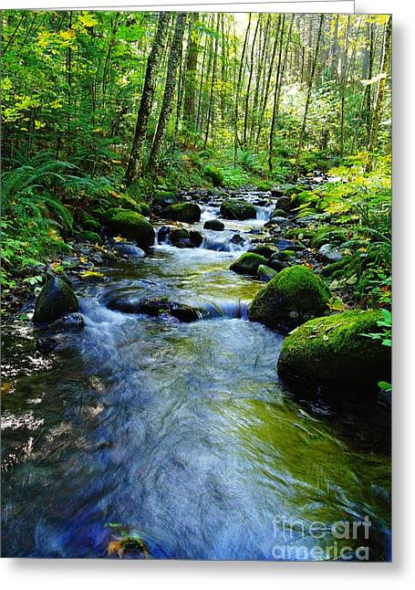 Moss Green Greeting Cards - Mossy Rocks And Water   Greeting Card by Jeff  Swan