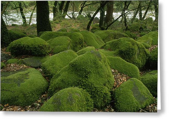 North Fork Greeting Cards - Mossy Rocks At Middle Fork Feather Greeting Card by Phil Schermeister