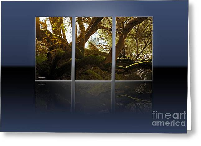 Trees Images Greeting Cards - Mossy Tree Triptych 1 Greeting Card by Cheryl Young