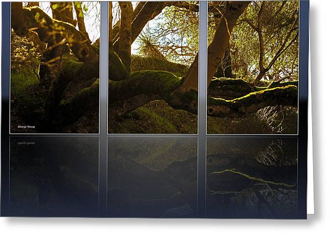 Wall Art For Your Home Or Office Greeting Cards - Mossy Tree Triptych 2 Greeting Card by Cheryl Young