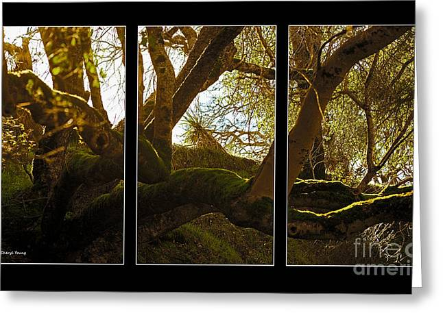Images Of Trees Greeting Cards - Mossy Tree Triptych 3 Greeting Card by Cheryl Young