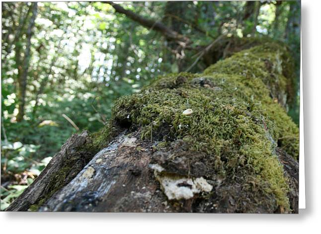 Moss Greeting Cards - Mossy Woods Greeting Card by Joshua Sunday