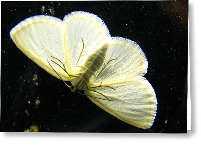 Subtle Colors Greeting Cards - Moth In Color Greeting Card by Serenity Baumer