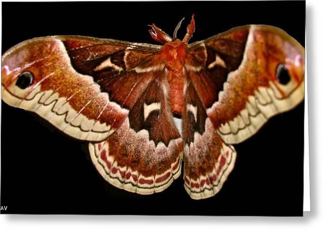 Lush Mixed Media Greeting Cards - Moth Red Wings Greeting Card by Debra     Vatalaro