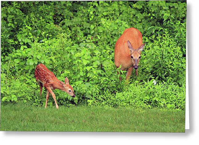 Two Deer Greeting Cards - Mother and Child Greeting Card by Karol  Livote