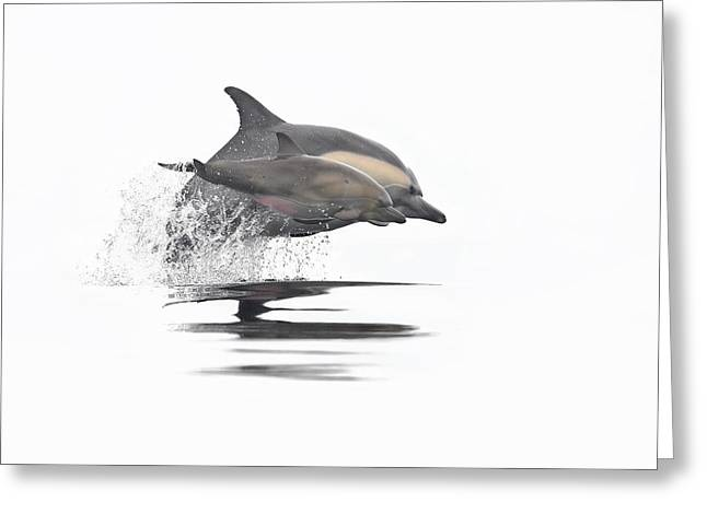 Dolphin Greeting Cards - Mother and Daughter 3 Greeting Card by Steve Munch