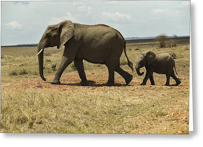 Savannah Nature Photography Greeting Cards - Mother And Infant Elephants, Loxodonta Greeting Card by Nigel Hicks
