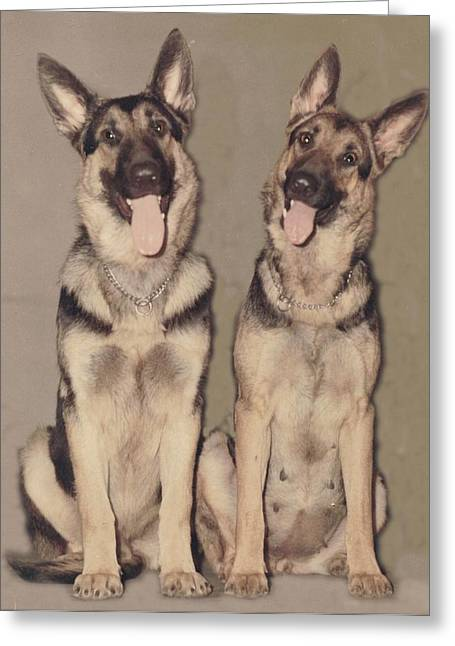 Pat Mchale Greeting Cards - Mother and Son Shepherds Greeting Card by Pat Mchale