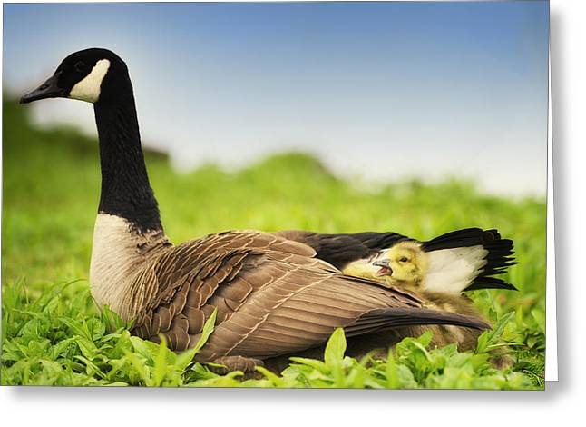 Mother Goose And The Loud One Greeting Card by Vicki Jauron
