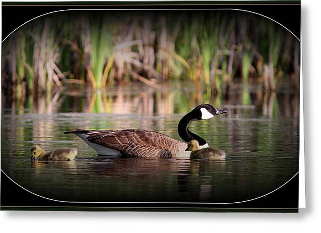 Mother Goose Greeting Cards - Mother Goose Greeting Card by Travis Truelove