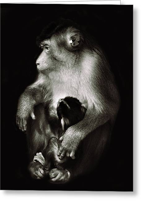 Austere Greeting Cards - Mother Greeting Card by Ivan Vukelic