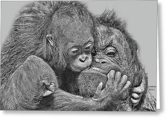 Orangutan Digital Art Greeting Cards - Mother Love Greeting Card by Larry Linton