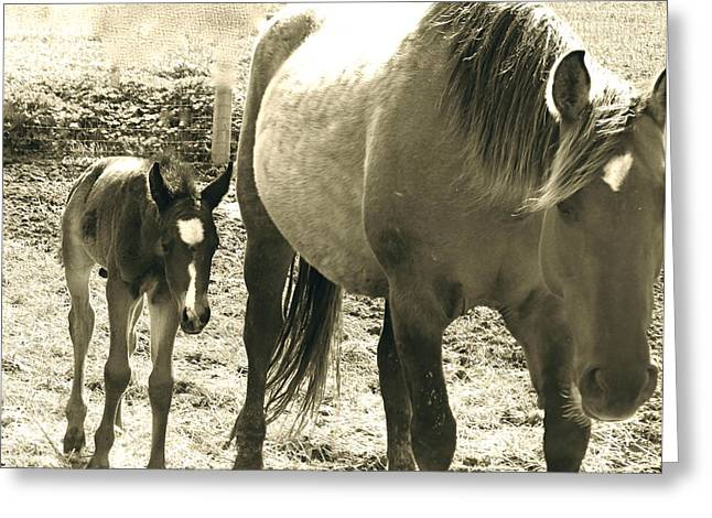 Wild Horse Pyrography Greeting Cards - Mother Love Greeting Card by Tess  Marie