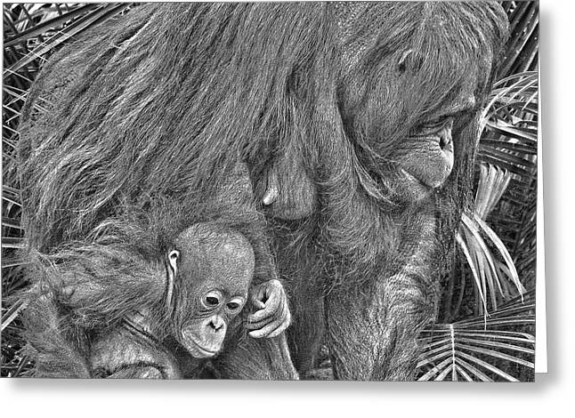 Orangutan Digital Art Greeting Cards - Motherly Love Greeting Card by Larry Linton