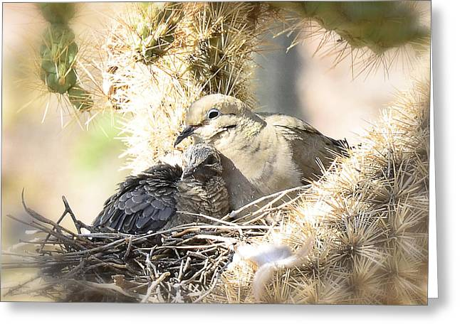 Mourning Dove Greeting Cards - Motherly Love  Greeting Card by Saija  Lehtonen