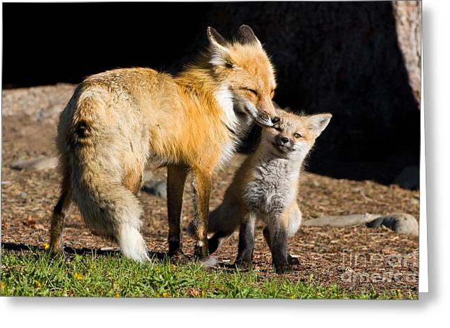 Mothers Love Greeting Card by Danny  Nestor
